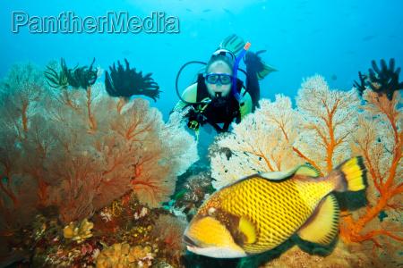 triggerfish i nurek