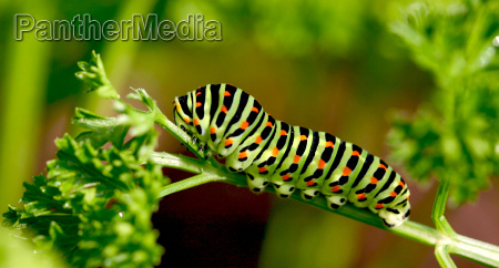 ogrod ogrodek owad motyl lato letni