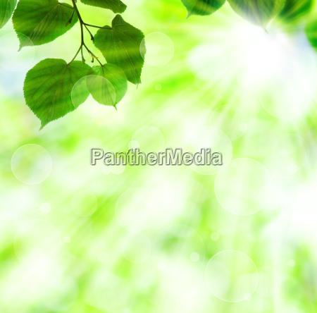 wiosenne slonce belka z zielonych lisci