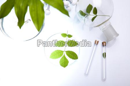 szklo laboratoryjne zawierajace rosliny w laboratorium