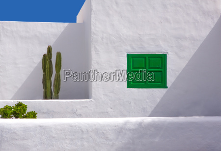 lanzarote san bartolome white typical cactus
