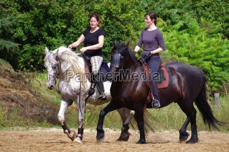 jazda na konie fryzyjskie w lecie