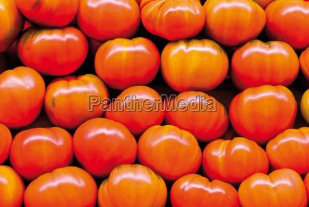 witaminy pomidor pomidory czerwone czerwony swieza