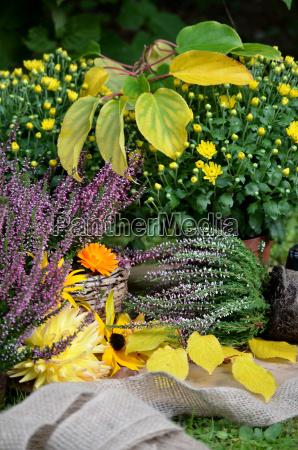 jesienny ogrod warzywny