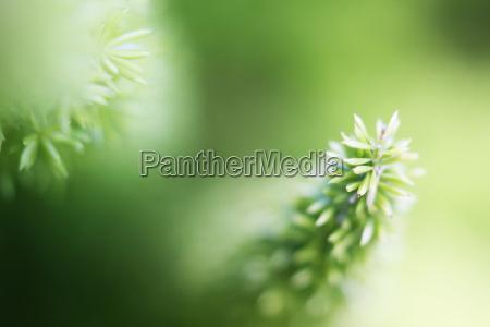 rosliny nieostre w tle