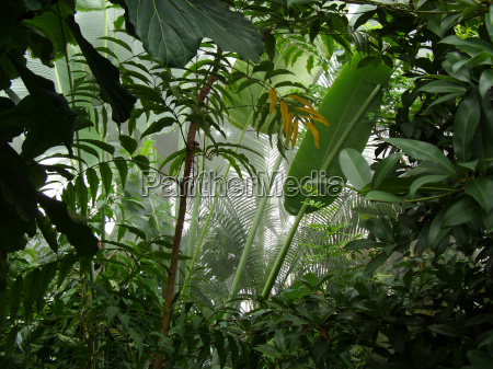 widok na tropikalny las deszczowy