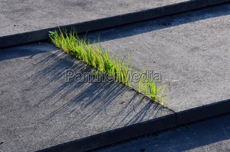trawa i beton