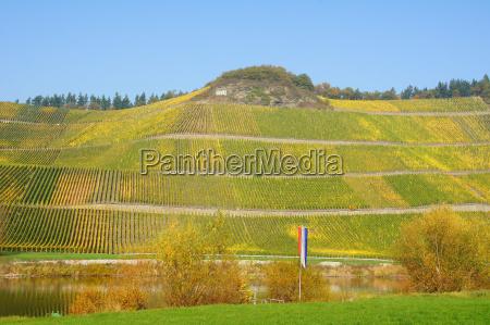 komora winnica braunebergerrn