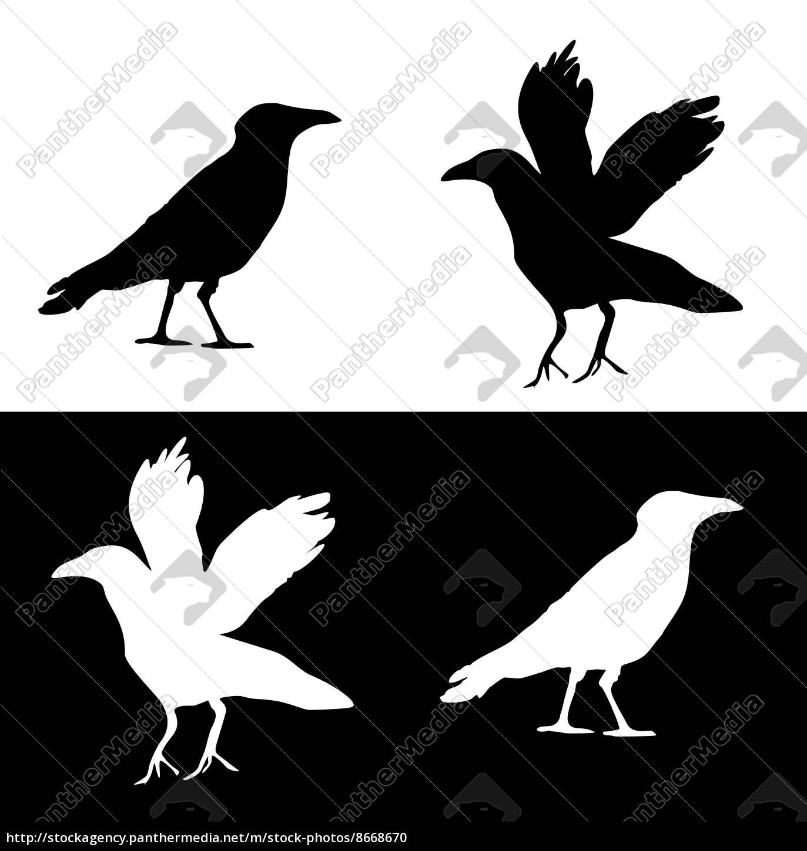 raven, -, zestaw, graficzny - 8668670
