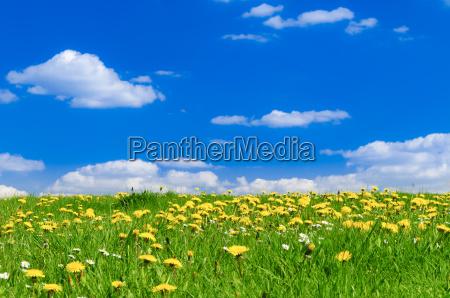 wiosenna laka z sun ray