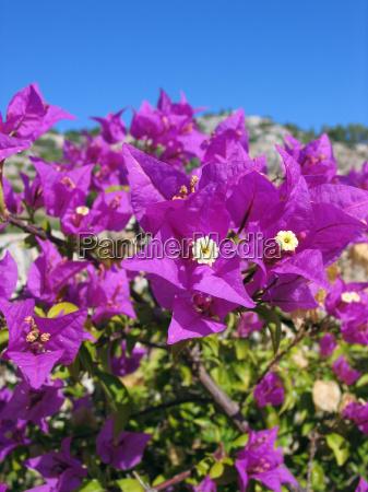 kwiat kwiatek zawod roslina drzewa rozkwitac