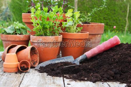 wiosna krynica doniczka ogrodnictwo praca w