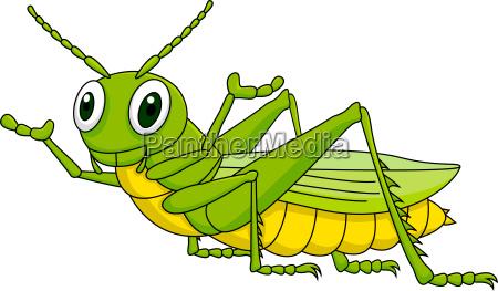 grasshopper kreskowki