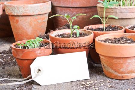czas sadzenia