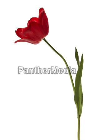 zwolniony kwiat kwiatek zawod roslina wiosna