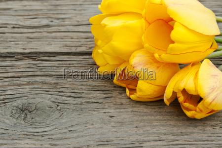 kwiat kwiatek zawod roslina zielony drewno