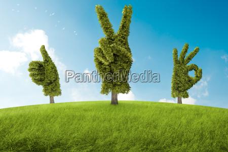 ruch reka ok drzewo gest pozytyw