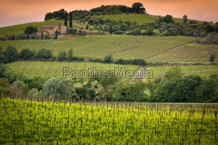 winnica w poblizu montalcino toskania wlochy