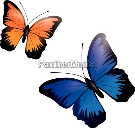 niebieski zwierze owad motyl motyl opalizujacy