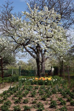 drzewo drzewa ogrod ogrodek kwiat kwiatek