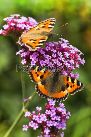 ogrod ogrodek owady insekty kwiat kwiatek