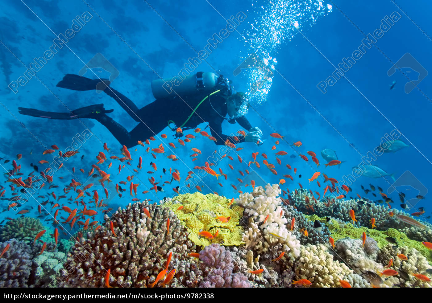 diver, on, the, reef, - 9782338