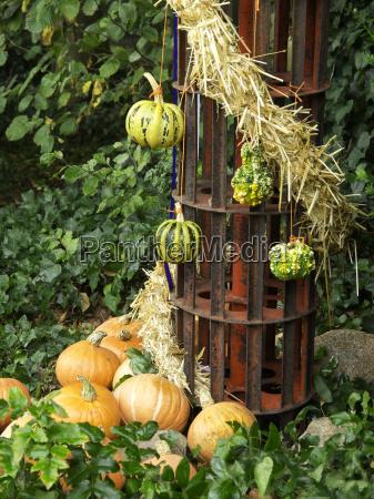 pomarancza pomarancz pomarancze ogrod ogrodek owoc