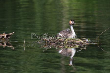 zwierze ptak ptaki piora przyrody wodnych