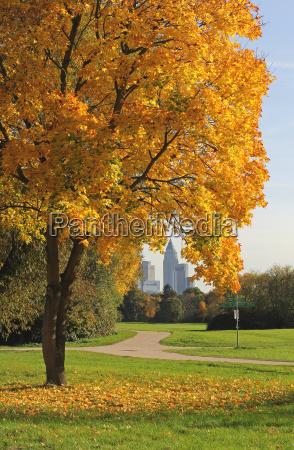 frankfurt miejskich pazdziernik wrzesien wypasc jesien