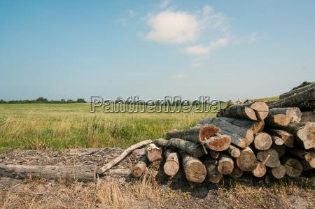 przyroda srodowisko drzewo przemysl bran drewno