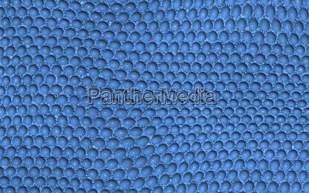 niebieski makro zblizenie close up zdjecia