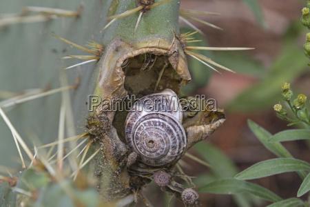 poganiac jesc pozerac kaktus kolczasta kolczasty
