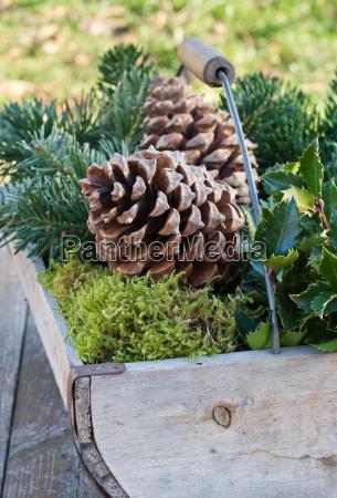 zima zimowy drewno drewna aste oddzial