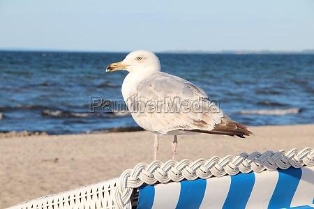 na baltyckiej plazy
