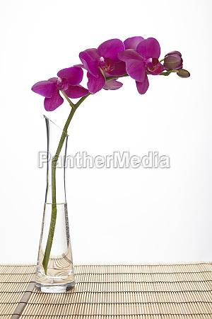 purpurowa orchidea w wazonie