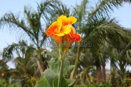 flower plant bloom blossom flourish flourishing