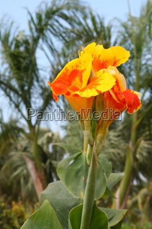 kwiat, kwiatek, zawod, roślina, latorośl, drzewa - 10820610