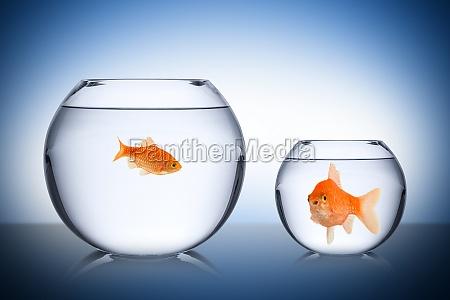 ryba koncepcja zazdrosci spoleczna