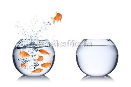 ryby odwaga concept