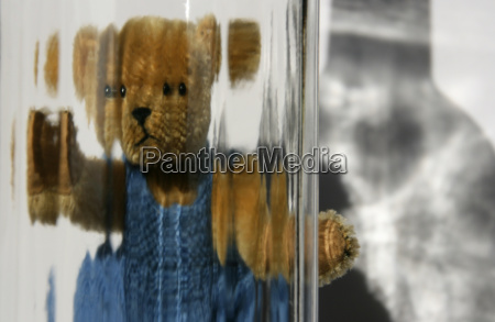 teddy z widokiem