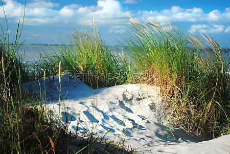 dune i wydmy trawa