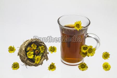 zwolniony wiosenne kwiaty zwiastun wiosny asteraceae