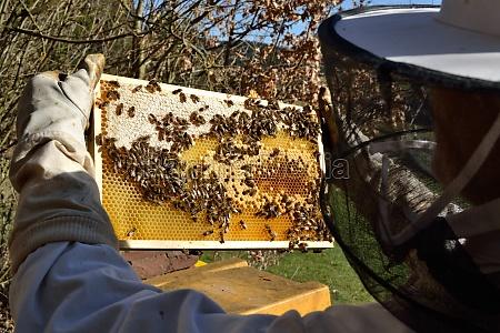 pszczoly ul ule pszczelarz
