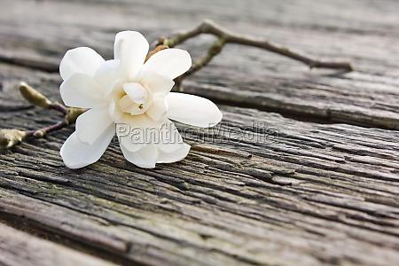 tablica drewno drewna brazowy brazowe brunetka