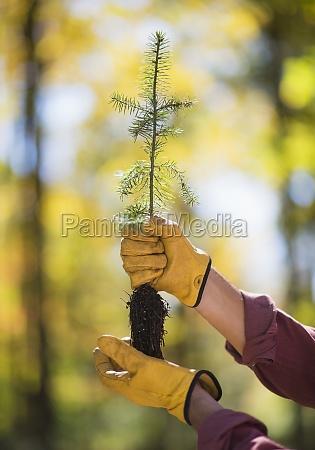 przyroda srodowisko drzewo dreck na zewnatrz