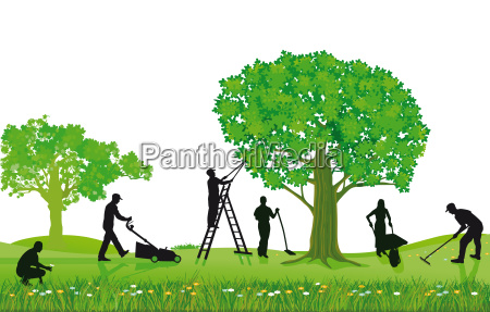 rosliny ogrodowe i przycinanie