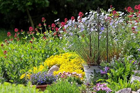 kolorowe kwiaty w ogrodzie