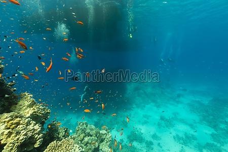 nurkow i zycia wodnego w morzu