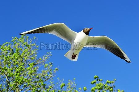 niebieski zwierze ptak tragflaeche skrzydlo wyciag