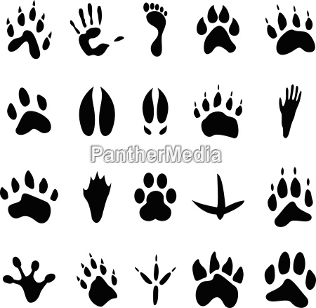 kolekcja 20 zwierzat i ludzi ekonomicznie